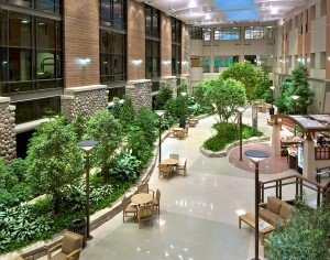 Marvelous Roma Landscape Design Offers A Free Consultation On The Best Applications  For Office Plants In Your Environment, And Our Green Guarantee Ensures That  Your ...