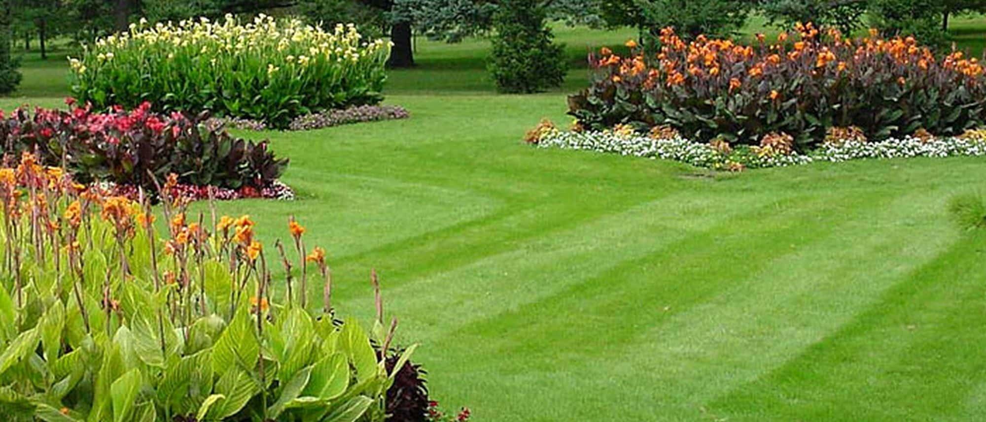 Университет ландшафтный дизайн газон озеленение