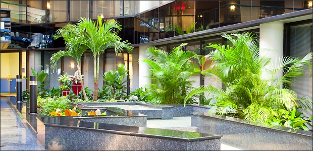 Tropical Interior Landscape Roma Landscape Design